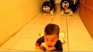 Dziecko uczy się raczkować, ale tylko spójrzcie, co robią widoczne w tle dwa psy