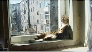 19 kotów, które są mistrzami w wynajdywaniu najcieplejszych miejsc do spania! Nu