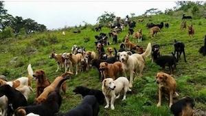 Nigdy nie zgadniecie, co tam robią te wszystkie psy! Genialne!