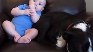 Obserwuj uważnie śpiącego psa, to co zaraz zrobi jest świetne!