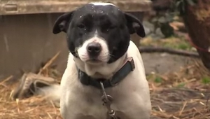 Ten biedny pies całe życie spędził na łańcuchu, aż pewnego dnia stało się coś wz