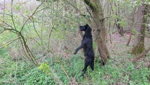 Mężczyzna wybrał się na spacer do lasu w Niemczech. Nagle zobaczył psa powieszon