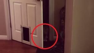 Kot wyszedł z pokoju w typowym dla kotów stylu. Padam ze śmiechu!