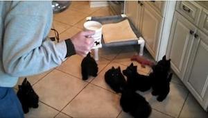 Zobaczcie, co się stanie, gdy naleje im mleka do miski. Tego się nie spodziewała