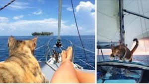 Miała sama podróżować po świecie, ale na jej drodze pojawił się bezpański kot...