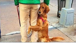 To, co zrobił ten pies, jest genialne! A powód? Jeszcze lepszy!