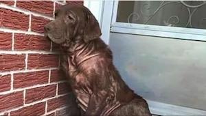Ten pies codziennie siadał na opuszczonym ganku, ale gdy podszedł do niego obcy,