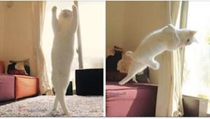 To najzwinniejszy kot, jakiego kiedykolwiek widziałam! Tylko zobaczcie, co potra