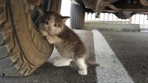 Mężczyzna znalazł tego kotka pod swoim samochodem. Kiedy jego żona napisała ten