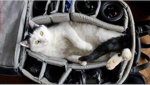 Tych 12 zwierząt nie chce, by ich właściciele podróżowali bez nich... Zdjęcie nu