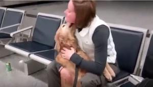 Kobieta wychodzi z samolotu. To, co dzieje się, gdy zobaczy ją jej pies, wzruszy
