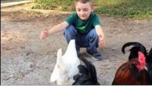 Chłopiec wraca od fryzjera i idzie prosto do swoich kur. Zobaczcie, co się dziej