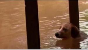 Właściciele przywiązali psa i... uciekli! Gdyby nie obcy ludzie, ta historia mia