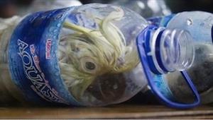 Celnicy w pierwszej chwili nie wierzyli w to, co zobaczyli w tych butelkach! Szo