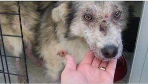 Rzucali w tego psa kamieniami... Aby go obronić, nastolatka pokonała swój najwię