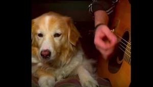To, co robi ten pies, gdy jego pan zaczyna grać, jest... niewiarygodne!