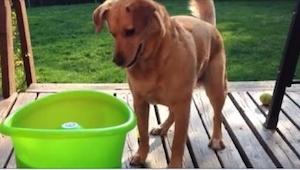 Podekscytowany pies skacze wokół zielonej miski. Co z niej wyskoczy w 9 sekundzi