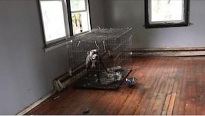 Psy pozostawione w pustym domu na pewną śmierć zrobiły coś niesamowitego na wido