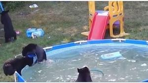 Usłyszeli w ogrodzie hałas. Nie spodziewali się zobaczyć TAKICH gości!