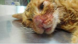 Kotek został pobity przez swojego właściciela. Powód jest niedorzeczny!