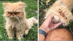 Gdy zbliżył się do nich bezpański kot, myślieli, że jest bardzo niezadowolony, a