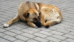 Zobaczcie jak w prosty sposób napełnić miskę bezdomnym zwierzętom! MY popieramy