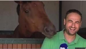 Dziennikarz próbował opowiedzieć o koniach, ale zobaczcie, co robi w tym czasie