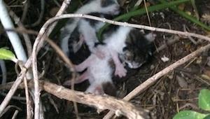 Znalazła 3 kotki w krzakach. Gdy się lepiej rozejrzała zobaczyła TO...