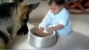 Pozwolilibyście dziecku bawić się psią karmą? Zobaczcie reakcję tego potężnego o