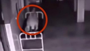 Ta kobieta leżała martwa na szpitalnym korytarzu. Była na nią skierowana kamera