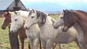 Konie spojrzały w dół i sobaczyły TO. Ich reakcja była natychmiastowa. Zobaczcie