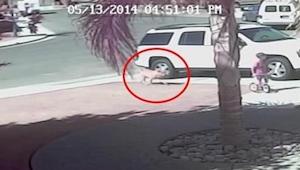 Odwaga tego kota jest niesamowita! Gdy zauważył dziecko atakowane przez psa, nat