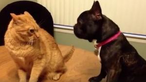 Psy kontra koty... Tego starcia nie możecie przegapić! Już w trzeciej sekundzie
