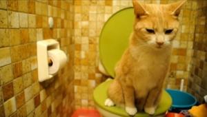 To co zrobi zaraz ten kot z pewnością Cię rozbawi!