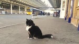 Kot przez 9 miesięcy nie miał domu. Teraz całe dnie spędza na platformie stacji