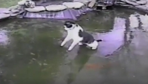 Ten kot zauważył rybki pod warstwą lodu. To co zrobił później jest świetne!