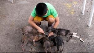Ten chłopiec znalazł za kościołem coś, co przypominało sześć wielkich szczurów.