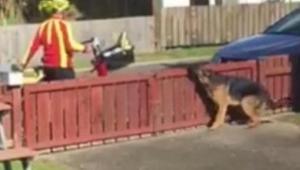 Właściciel ukrył się za firanką i nagra spotkanie psa z listonoszem. W 0:12 na w