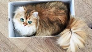 Przedstawiamy Wam najpiękniejszego kota Internetu! Waszym zdaniem zasłużył na to
