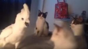 Gdy trzy koty otoczyły papugę, ta wydała z siebie niesamowity dźwięk. Musicie ob