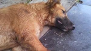 Pies leży na chodniku, ale gdy zobaczyłam całe zdjęcie mało nie zemdlałam...