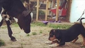 Gdy przygarnęła pod swój dach porzuconego psa, nie sądziła, że TAK to się skończ