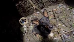 Gdy ratownik zjechał na dno studni, by uratować psa, ten powitał go w szczególn