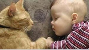 Zastanawiali się, czy adoptować kota, bo niedawno urodziło im się dziecko... Ter
