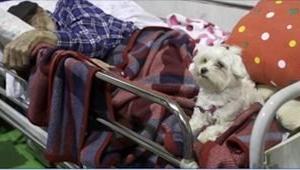 Maltańczyk nie opuścił swojego 97-letniego właściciela podczas trzęsienia ziemi