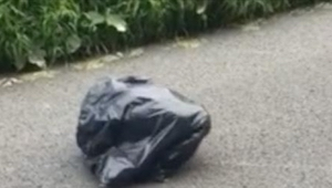 Szczeniaczek dusił się w worku na śmieci. Kobieta, która go uratowała, zyskała n