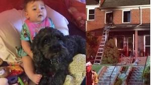 W czasie pożaru w domu została uwięziona dziewczynka i jej pies. Polo mógł uciec
