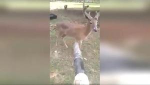 Gdy na jego posesji pojawił się jeleń, mężczyzna potraktował go... dmuchawą do l