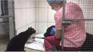 Pies trzęsie się ze strachu, a wtedy koło niego kładzie się czarny kot. Powoli p