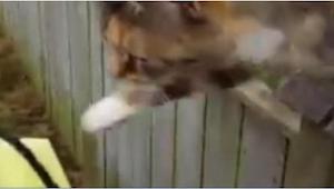 Nikt mu nie wierzył, że ten kot codziennie robi TO, więc listonosz w końcu chwyc